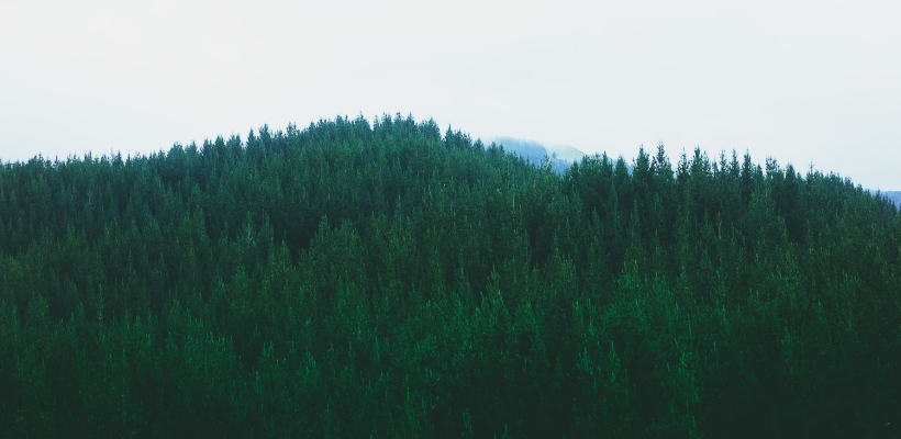 mountain_sound_misty_forest2