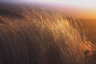 sunset-grass