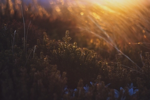 sunset-plants-and-flowers