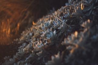 sunset-plants